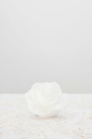 petalo luminoso bianco